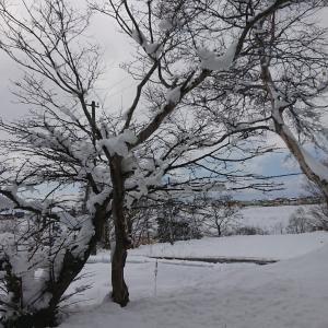 雪景色の再来