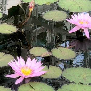 都立神代植物公園はすごい公園でした。Part2