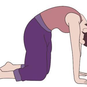 腰痛や自律神経を整える キャットアンドカウ