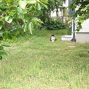 雑草だらけの我が家の原っぱ庭は猫にも愛されているようです