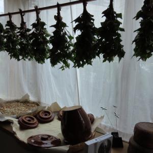 梅雨入り前の薬草香る部屋