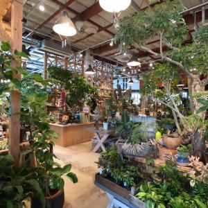 【the FARM UNIVERSAL】千葉の大型園芸店!久しぶりの植物めぐりで癒しの休日。