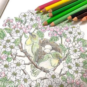 マンダラコロリアージュ【メジロと林檎花】の塗り絵が完成