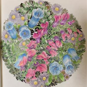 キンギョソウは難しいし葉っぱは細かい「世界一美しい花のぬり絵」