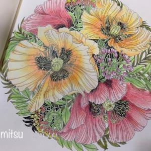 トウワタとポピーはシンプルに塗ってみた「世界一美しい花のぬりえ」