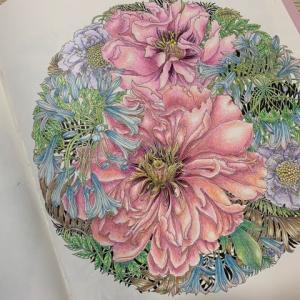 世界一美しい花のぬり絵BOOKより「アガパンサス・ボタン・マツムシソウ」