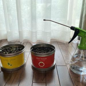 母の日のプレゼントにミニトマト栽培キットの缶詰はいかがですか?土と種が入っています。