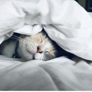 やっぱり、睡眠は大切です。(睡眠を長くとるための対策案)