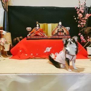 【ランチ】店内全席犬OK!町田の広々ドッグカフェ「プティシアン」