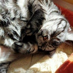 【コラム】猫の飼い方、昔と今