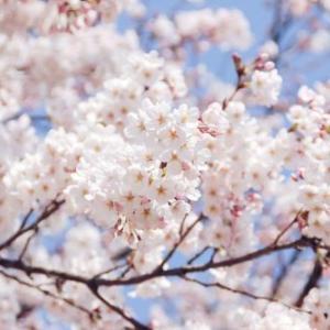 予算3倍の5700万円で批判殺到の『安倍総理と桜を見る会』