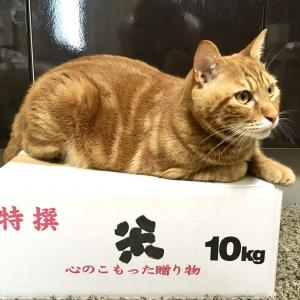 30度超え…猫も盛大なヘソ天でパッカーンとなる(Day601_6/12)