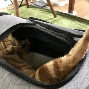 災害時に猫と避難する状況をシミュレーション。一番の問題はトイレ(Day624_7/5)