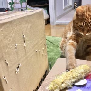 猫はとうもろこしを食べても大丈夫?あげすぎには要注意(Day630_7/11)