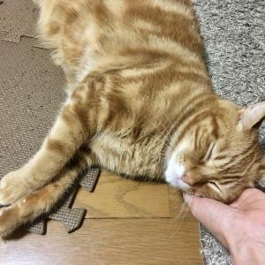 猫が虫に気を撮られている間に出勤したら帰宅時に怒られた(Day655_8/5)