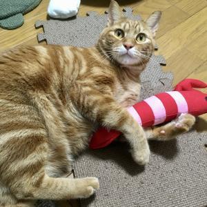 猫の熱中症対策にエアコンが消せません!お盆休み1日目(Day663_8/13)