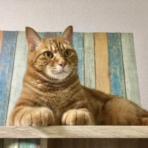愛猫と一緒に一日過ごせる幸せにいつかは再独立を考える(Day664_8/14)
