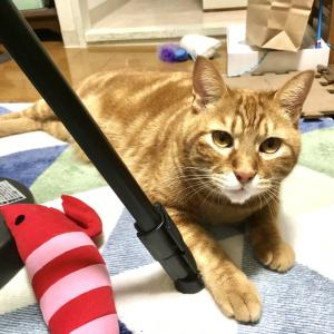 猫がまたドア前でのお出迎えをしてくれるようになりました(DAy775_12/3)