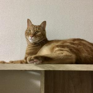 猫の姿が見えないと家の中を探し回る人間たち(猫との暮らしあるある)(Day968_6/13)