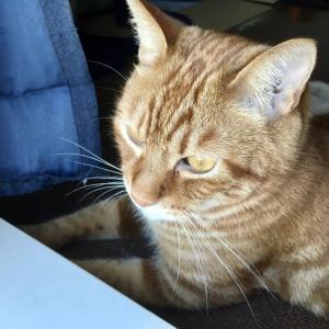 猫のお顔はどこから見ても隙なしの可愛さ(Day1012_7/27)