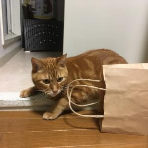 遊びたくて催促しまくる猫とお腹が空いてご飯を食べたい人間(Day1064_9/17)