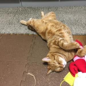 猫、秋の抜け毛シーズン始まったか(Day1070_9/23)