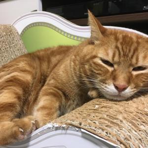 猫と同じ部屋で泊まれるフェリー会社が増えている!(Day1072_9/25)