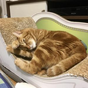 掃除機がけの毎日。猫と暮らすときれい好きになっていく?(Day1073_9/26)