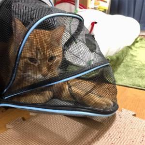 【人生のお手本は親である】猫の尿結石を対応して思ったこと