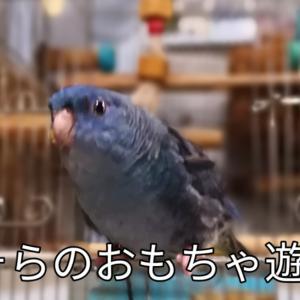 そらちゃんのロール遊び動画 六本木の惣菜パン ホルモンともやし炒め キンギョソウ ニチニチソウ