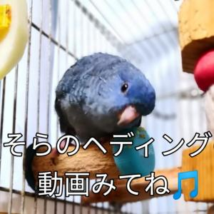 そらちゃんのヘディング 夏野菜カレー 横浜山手迎賓館 ランタナ