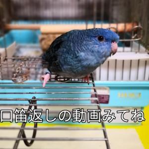 そらちゃんの口笛返し 新宿中央公園の紅葉 カキフライ