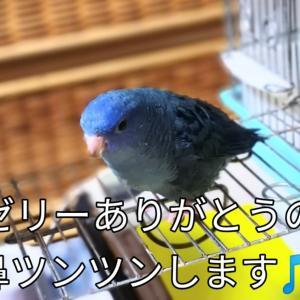そらちゃんお礼の鼻ツンツン モーニングセット ステンドグラス 春菊の天ぷら