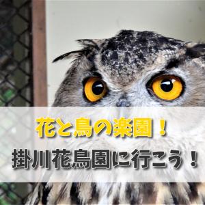 掛川花鳥園に日帰りで行ってきた件!鳥と花の楽園はここにあった!