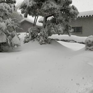 福井はやっぱり雪国