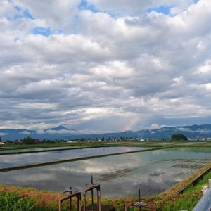 【会津に住んでいるおじさんが田植えをした話】