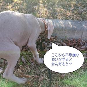 犬がうんちを食べる?食糞は犬にとっては普通のこと