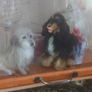 お盆に帰ってきた2匹目の先代犬