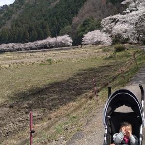 川浦の桜並木