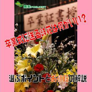 卒業式に送る鉢花は何がいい?選ぶポイントとお値段の解説