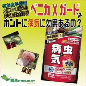 土にまくだけの殺虫殺菌剤ベニカXガードはホントに病気に効果あるの?