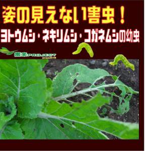 姿の見えない害虫!ヨトウムシ・ネキリムシ・コガネムシの幼虫