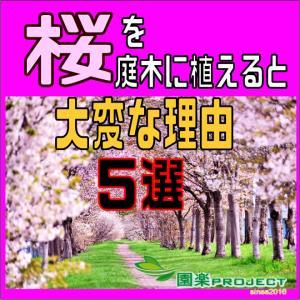 桜を庭木に植えると大変な理由5選