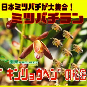 """日本ミツバチが大集合!ミツバチラン""""キンリョウヘン""""の秘密"""