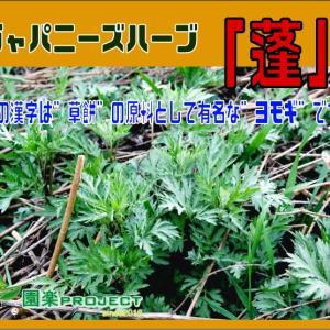 """ジャパニーズハーブ「蓬」この漢字は""""草餅""""の原料として有名な""""ヨモギ""""です。"""