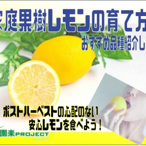家庭果樹レモンの育て方。おすすめ品種紹介します!ポストハーベストの心配のない安心レモンを食べよう!