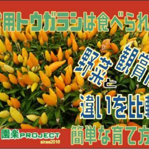 観賞用トウガラシは食べられる?野菜と観賞用の違いを比較。簡単な育て方紹介