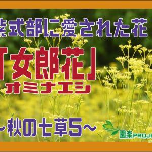 紫式部に愛された花「オミナエシ」~秋の七草5~