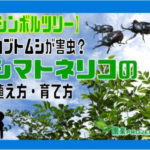 【シンボルツリー】カブトムシが害虫?シマトネリコの植え方・育て方