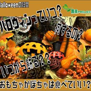 ハロウィンっていつ?何するの?いつから飾る??おもちゃかぼちゃは食べていい?